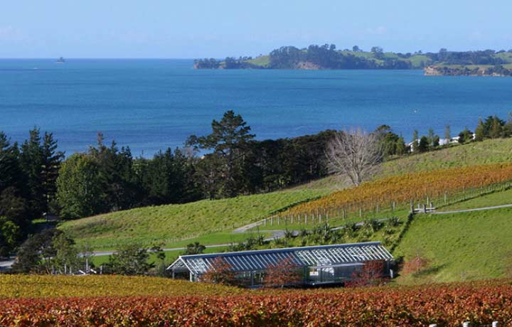matakana-wine-country-landscape_940_600_s_c1_center_center